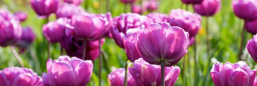 Primavera coi libri a Giardinid'Autore