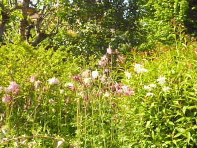 Il Giardino Naturale – 23 e 30 maggio2017