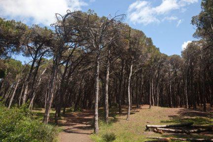 Forest_Cecina_Mare-e1495620490345